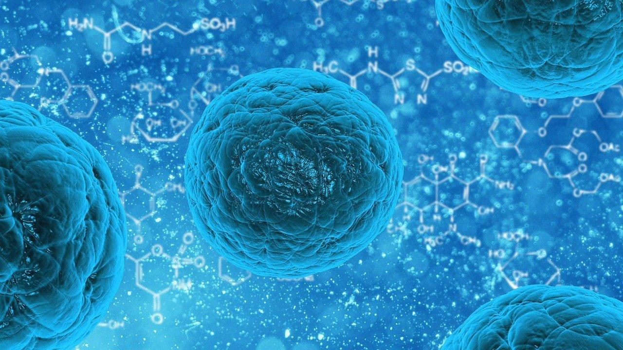 Morfología de Células Hemáticas